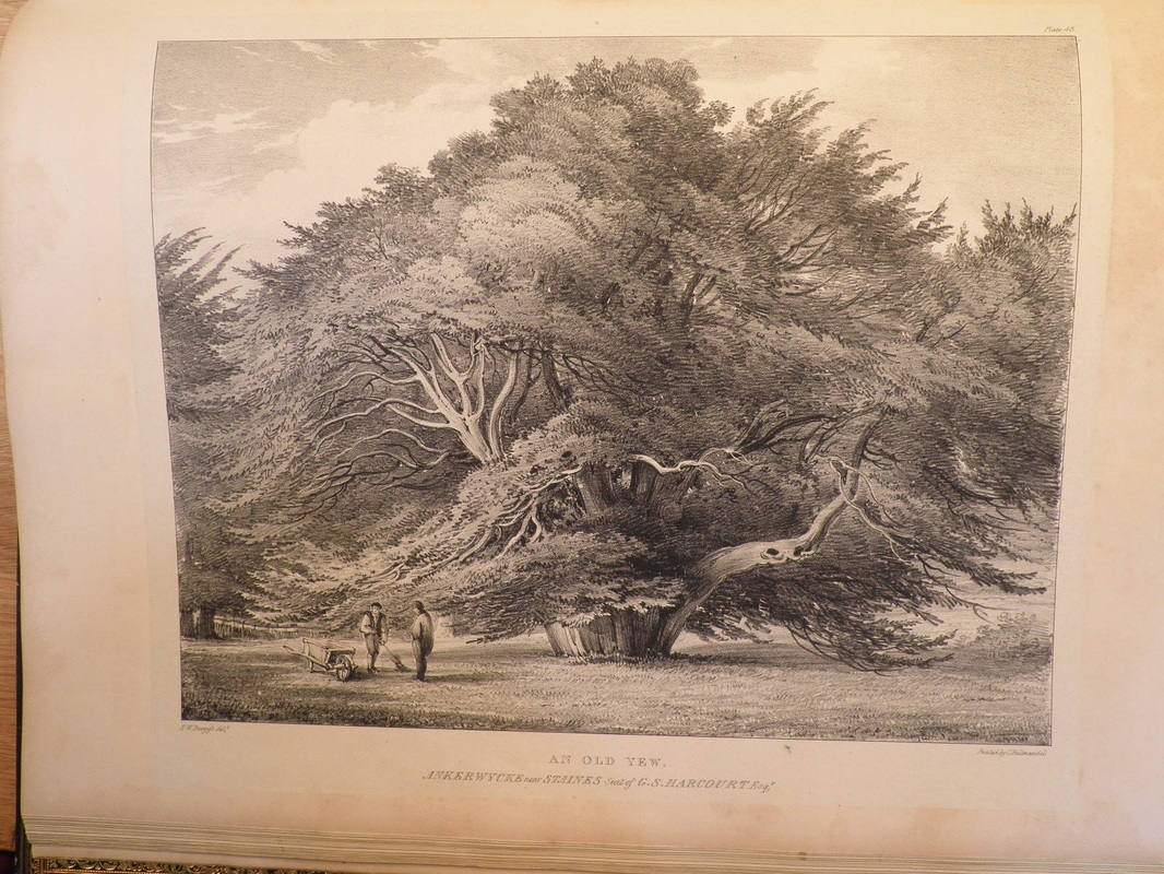 Here Are The Strutt And Burgess Images Side By Youd Hardly Think They Were Same Tree Would You Explanation I Is That A